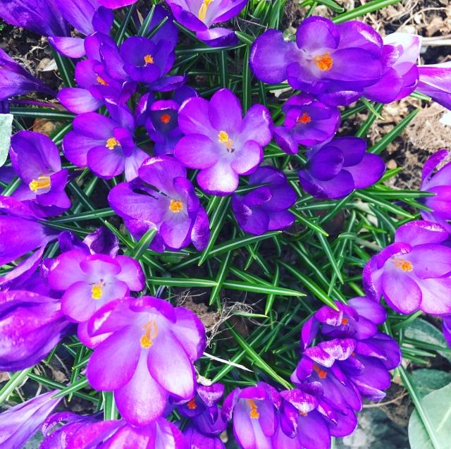 springs delight